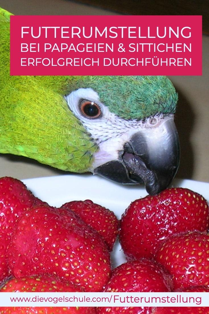 Futterumstellung bei Papageien - Ara