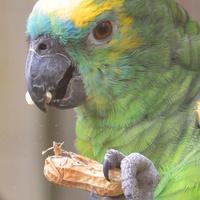 Aspergillose bei Papageien & Sittichen FIMG