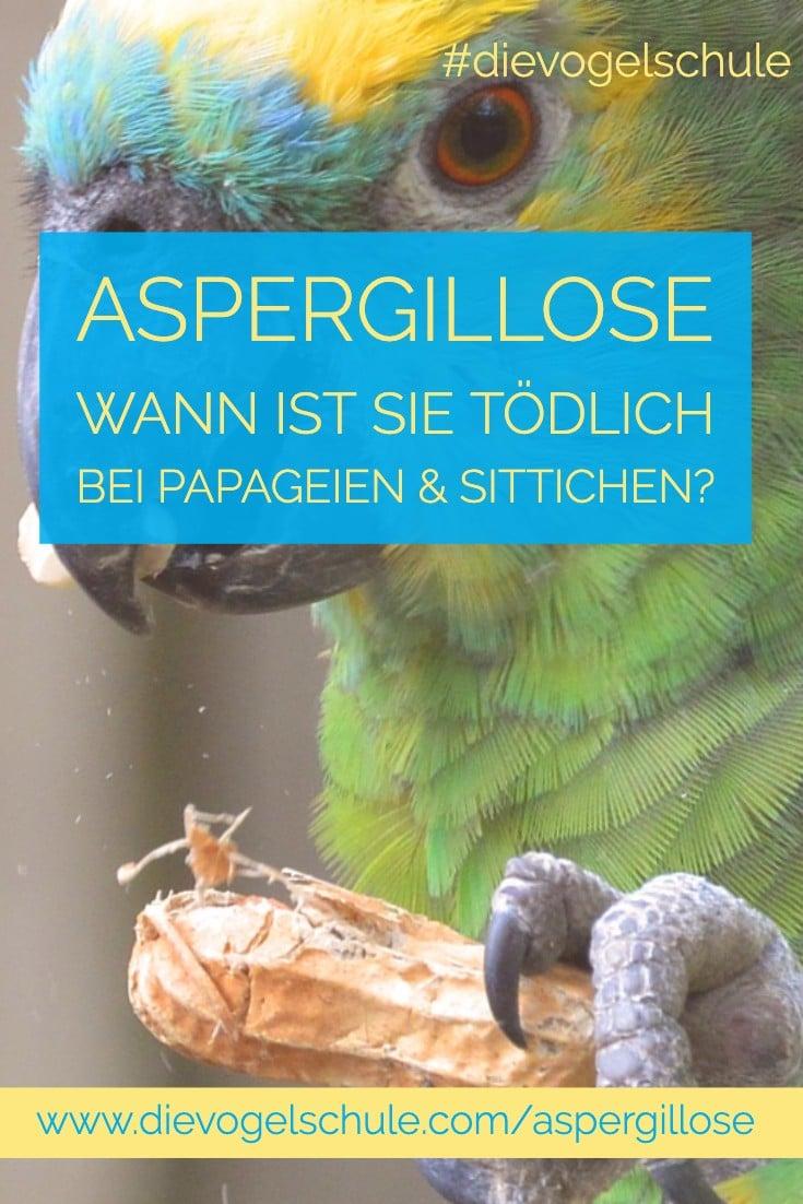 Aspergillose bei Papageien & Sittichen P-1