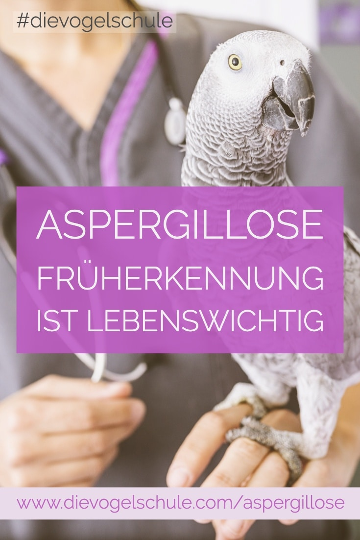 Graupapagei beim Tierarzt - Aspergillose bei Papageien & Sittichen P-2