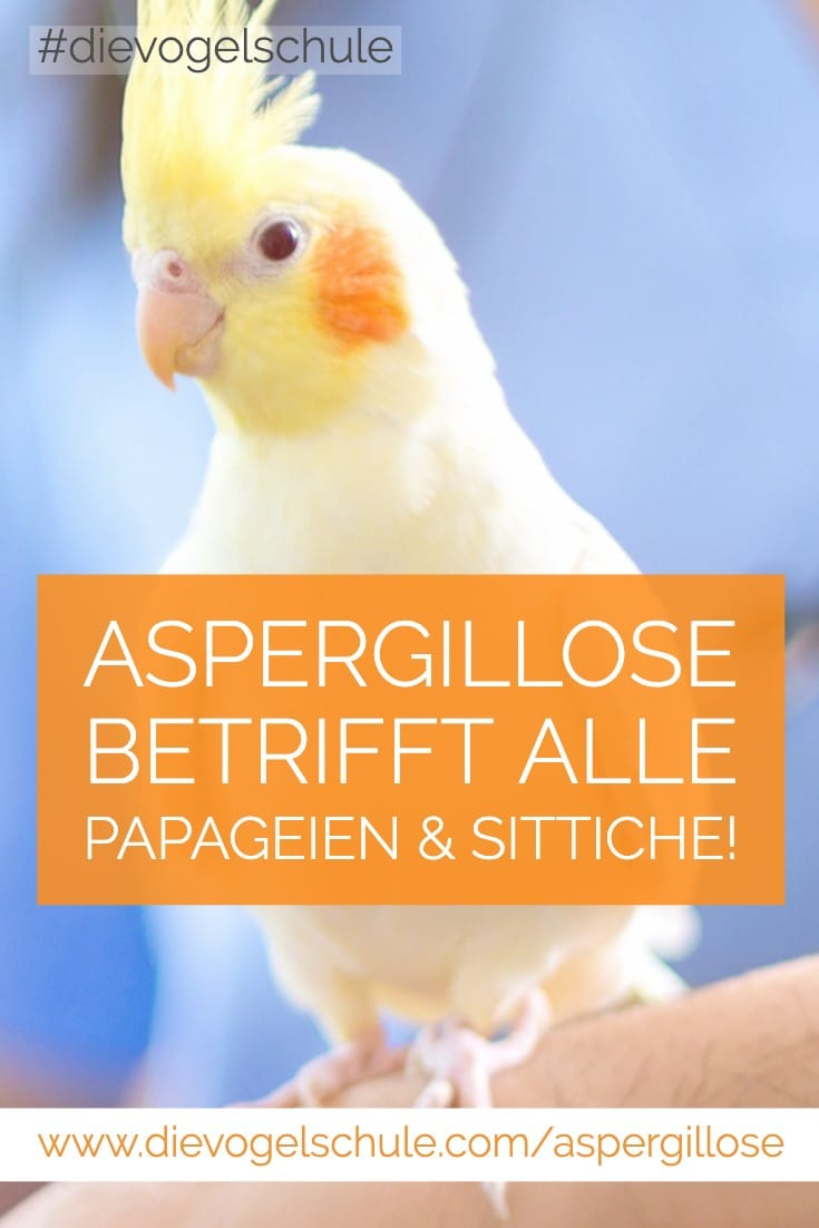 Nymphensittich  - Aspergillose bei Papageien & Sittichen P-3