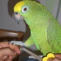 Amazone Nagelfeile Clickertraining Tipps für Papageien & Sittiche FIMG