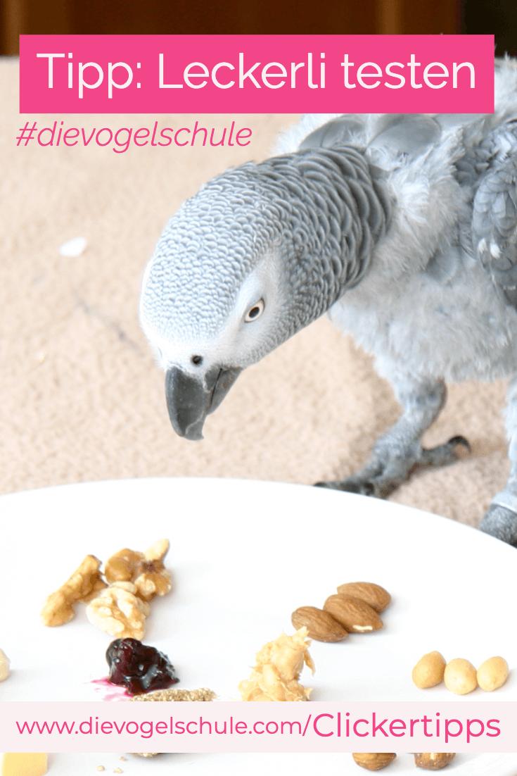 Graupapagei Leckerlitest Clickertraining Tipps für Papageien & Sittiche P 1