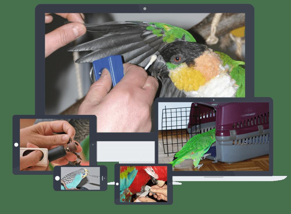 Verschiedene Screenshots vom Medical Training Webinar