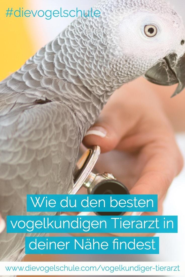 Vogelkundiger Tierarzt und Graupapagei