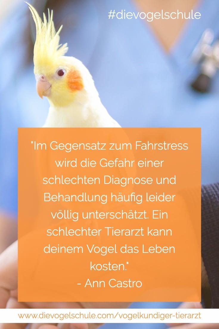 Nymphensittich & vogelkundiger Tierarzt Papageien & Sittiche