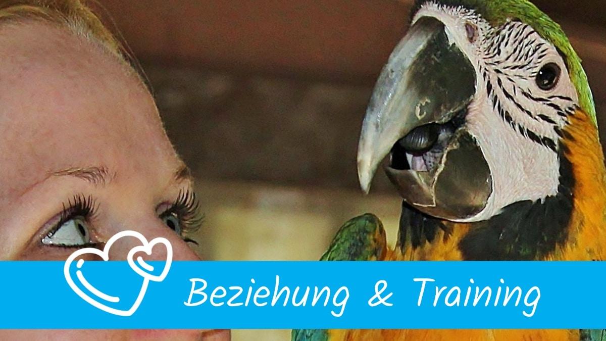 Beziehung & Training Papageien Sittiche