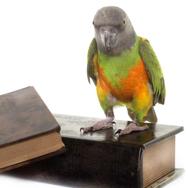 Bücher über Papageien & Sittiche