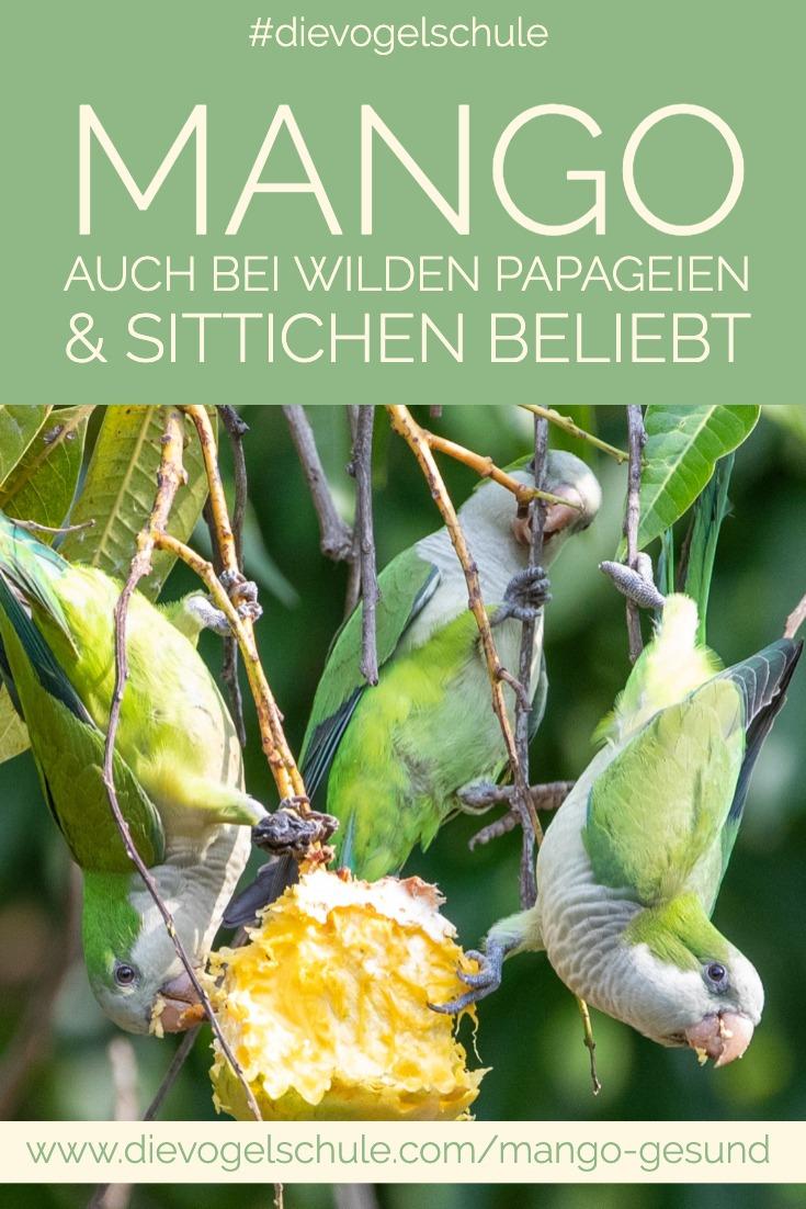 Mango gesund Papageien & Sittiche  wilde Sittiche