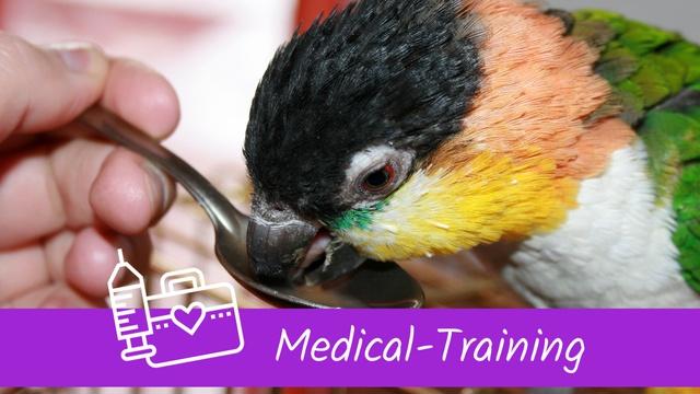 Medical-Training Papageien Sittiche