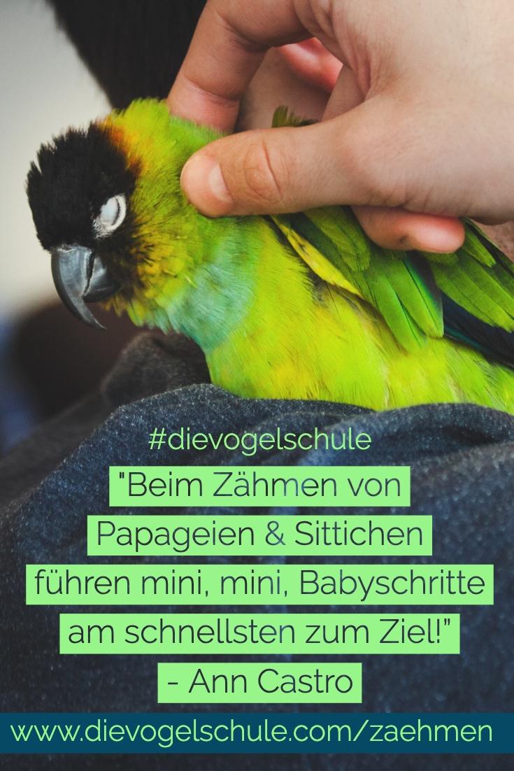 Papagei zähmen