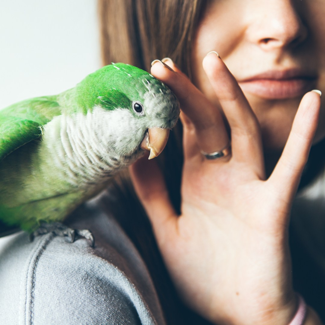 Papageienhilfe Coaching