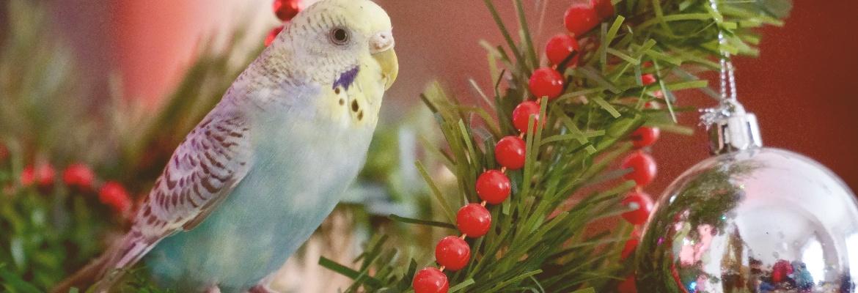 Weihnachten Papageien & Sittichen Wellensittich im Weihnachtsbaum