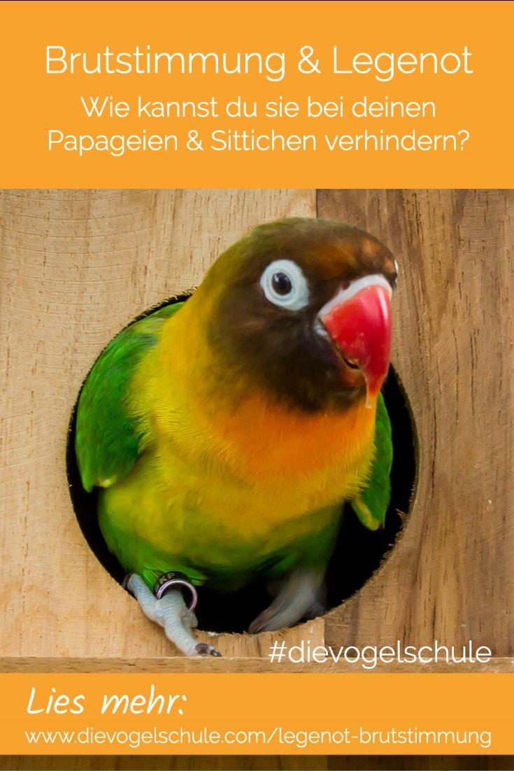 Legenot & Brutstimmung bei Papageien & Sittichen - Agapornide, Unzertrennliche, Pfirsichköpfchen