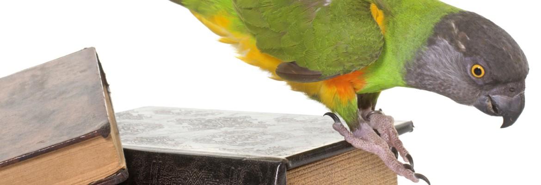 Papageien Bücher WP