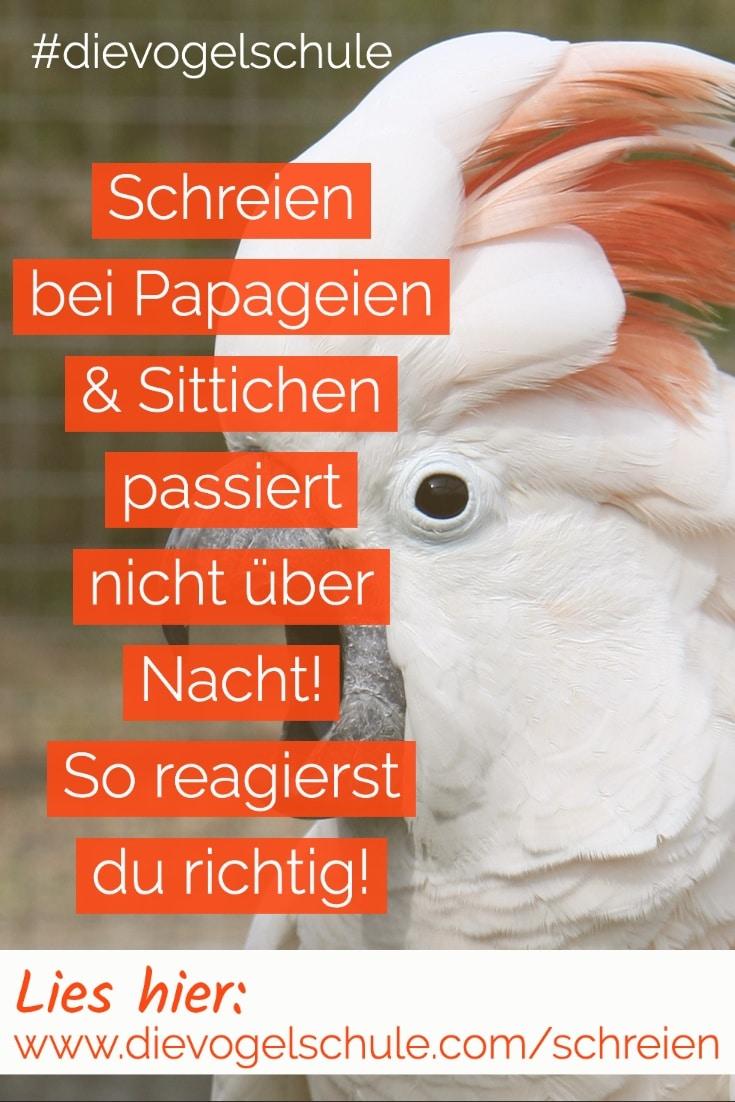 Schreien Papageien & Sittiche P1