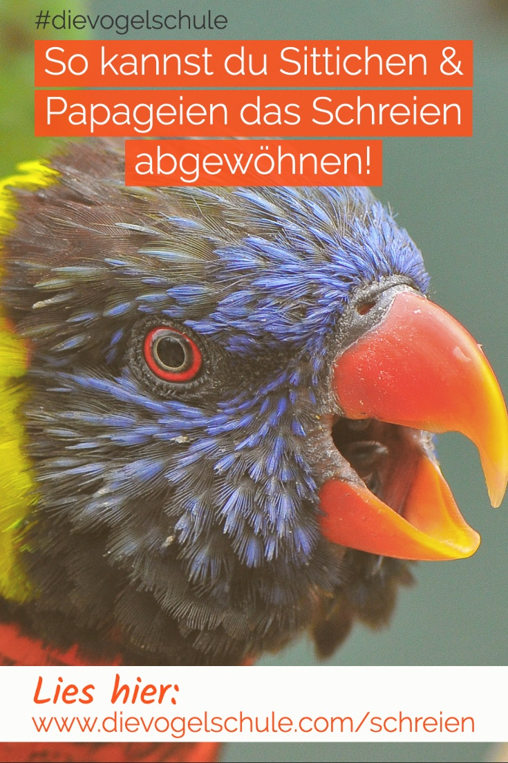 Schreien-Papageien-Sittiche-P-2