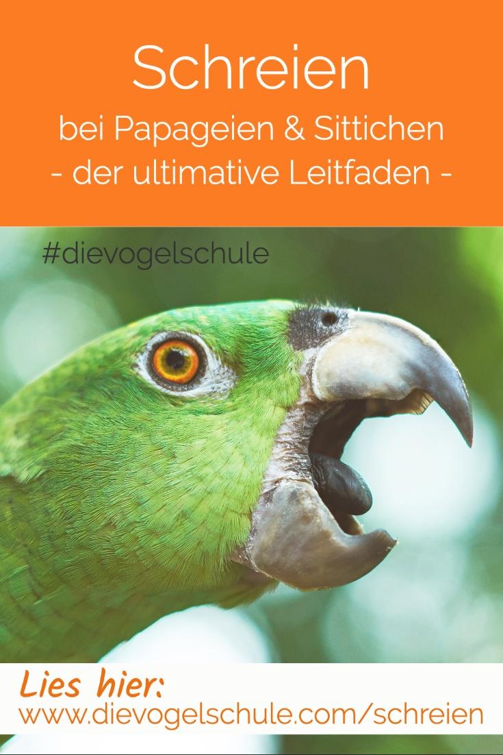 Schreien-Papageien-Sittiche-P-3