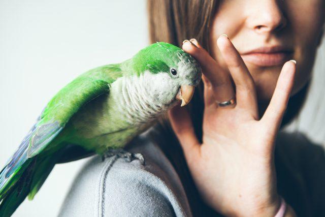 Beziehung & Training Papageien & Sittiche