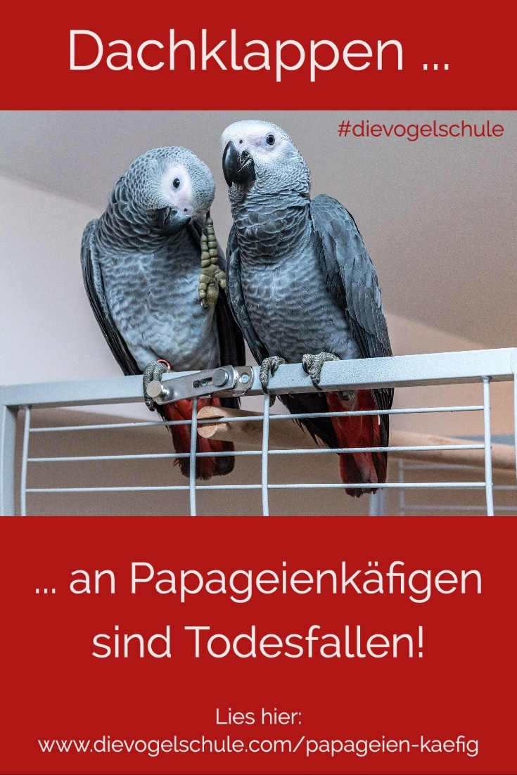 Papageien-Käfig mit Graupapageien
