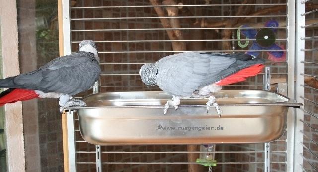 Papageien Badewanne-07