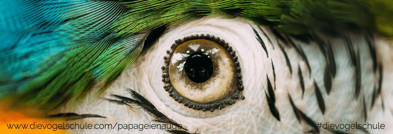 Papagei Auge - Karotinoide