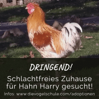 Hahn-Harry adoptieren