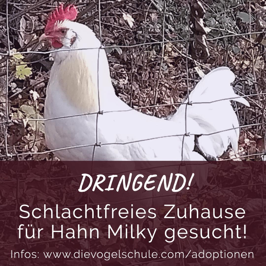 Hahn-Milky-adoptieren FB